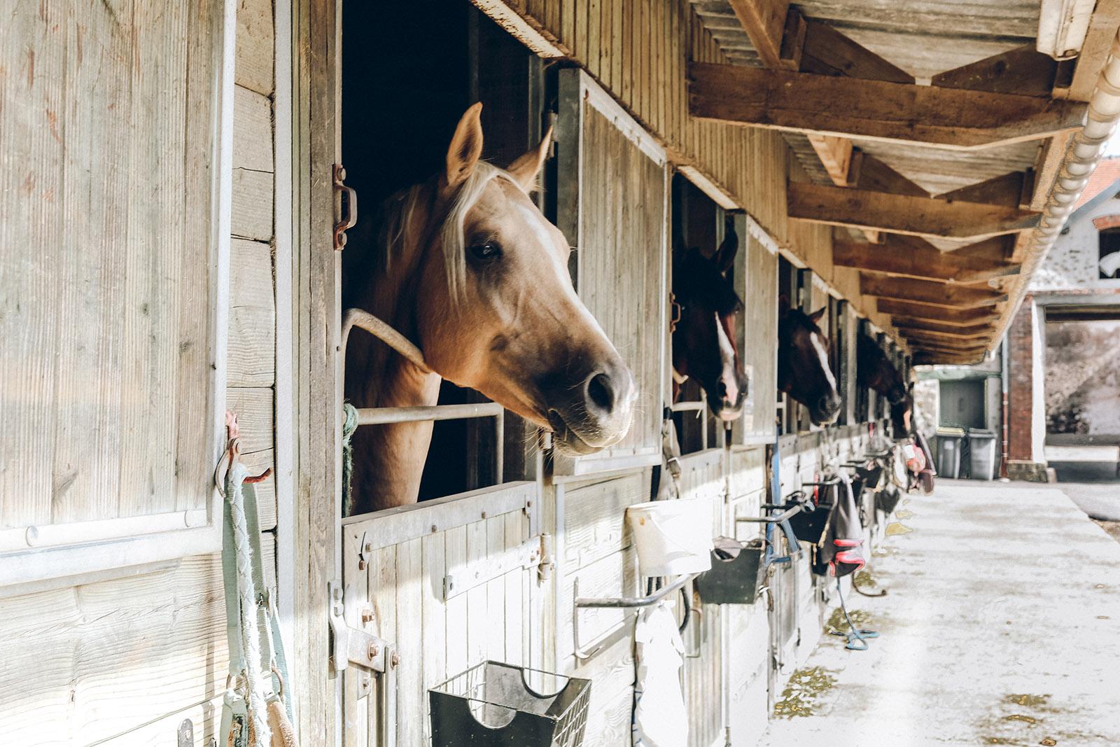 Covid – 19 a koszty (żywienia) (koni) w nadchodzącym sezonie.
